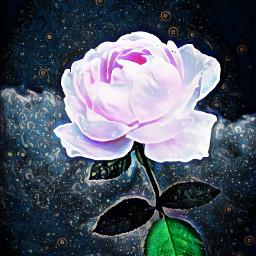 freetoedit magiceffect midnighteffect softlight flower