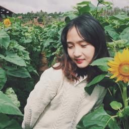 pcnewyearnewmeselfie newyearnewmeselfie freetoedit daklaktrip sunflower pcflowerselfie