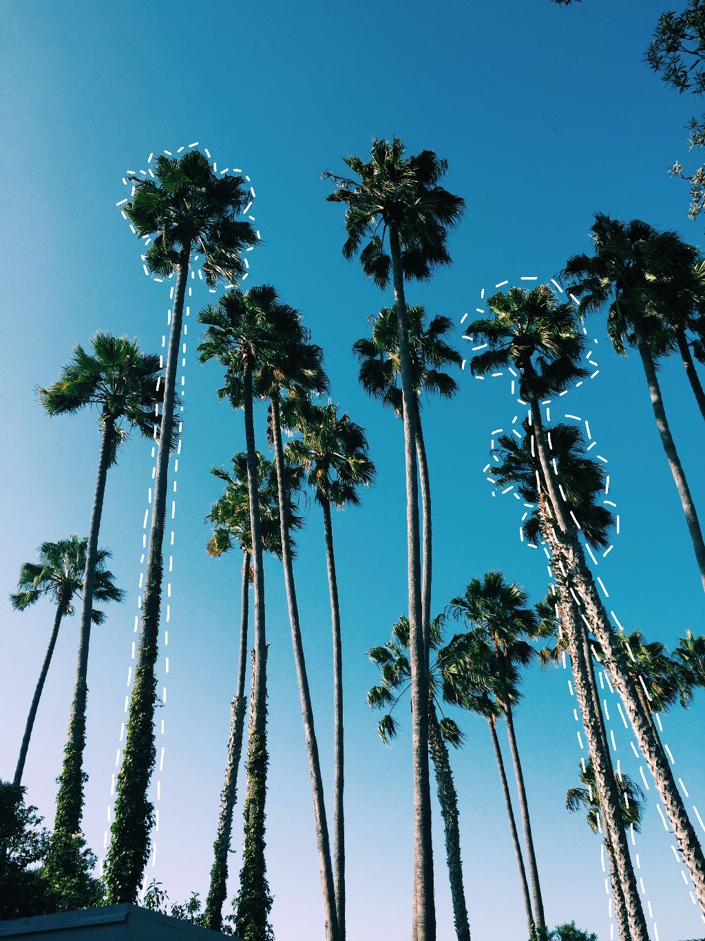 Palmtrees nature tumblr california outdoors photography edit