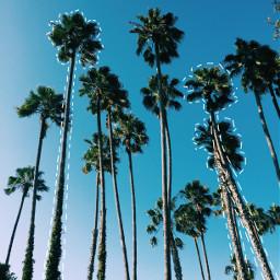 ecmytravel mytravel palmtrees nature tumblr