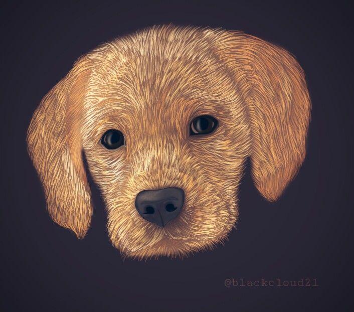 #dcmyspiritanimal #myspiritanimal #animaldoodles  #onecolor  #madewithpicsart #madebyme #mydraw #draw #mydrawing #drawing #dog #cute #pet #animals #petlove #puppy #goldenretriever #petsandanimals @picsart