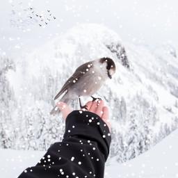 birdremix freetoedit dailyremix dailyremixmechallenge dailyeditchalenge