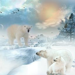 freetoedit polarbearremix myedit madewithpicsart