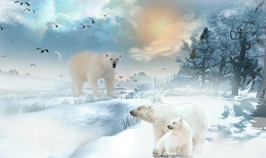 #polarbearremix #myedit #madewithpicsart