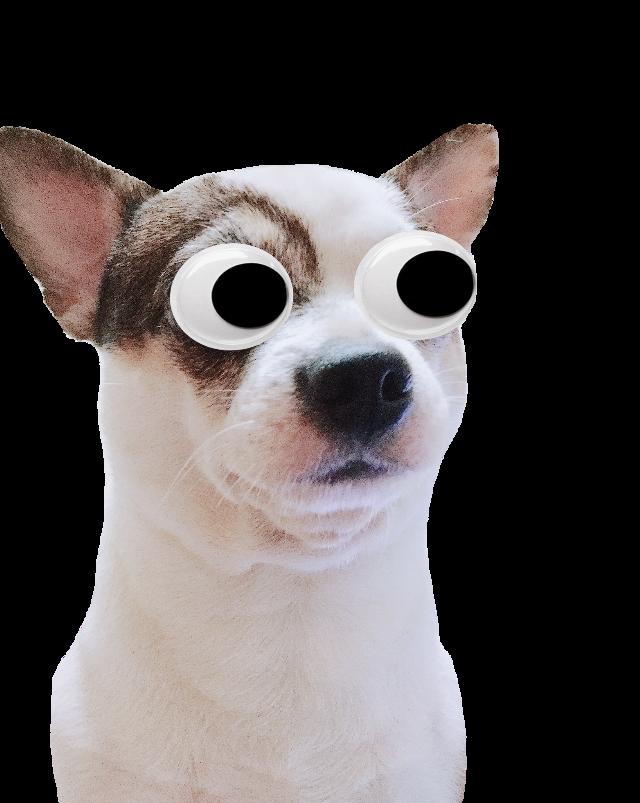 #avni #avnistickers #11avni11 #dog #puppy #sticker #avnijoshi #followmeformore #eyes #funny