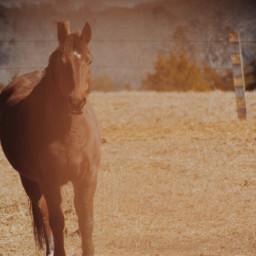 horse photography nature interesting
