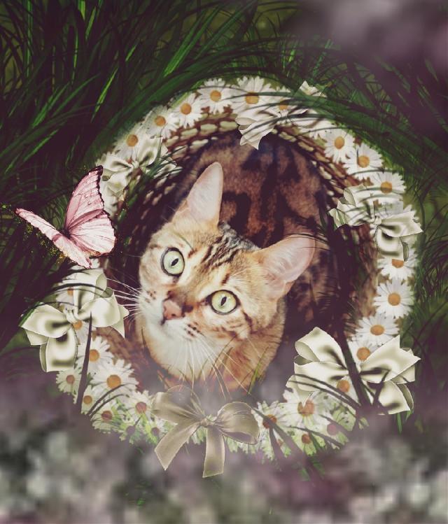 #myedit#cat#butterfly#grass