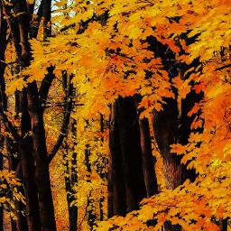 freetoedit remix scandinavia trees yellow
