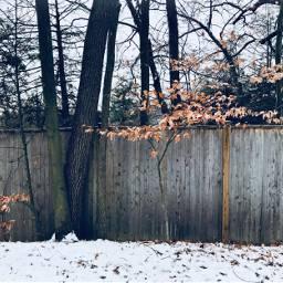 freetoedit fences snow trees