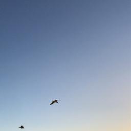 freetoedit sunset cali socal seagulls pcsunset