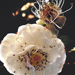 happysundayeveryone nature flowers naturesbeauty wildroses naturephotography