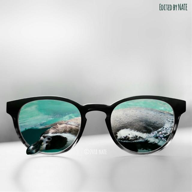 #sunglasses #glasses #penguin #myedit #edited (OP of glasses by Mark Solarski on Unsplash & photo of penguin by Teaksu Kim on Unsplash) *not free to edit*