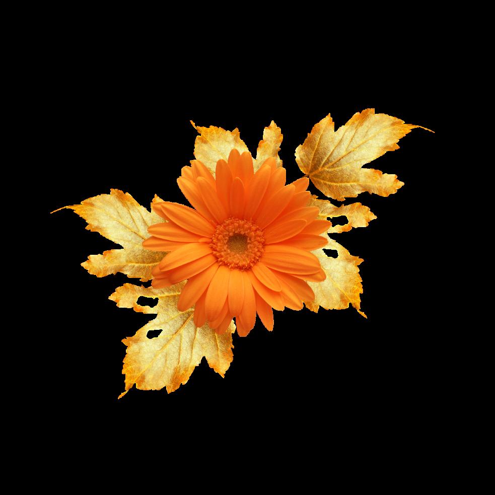 Daisy red bloom frame flower border flowers white bouqu daisy red bloom frame flower border flowers white bouqu izmirmasajfo
