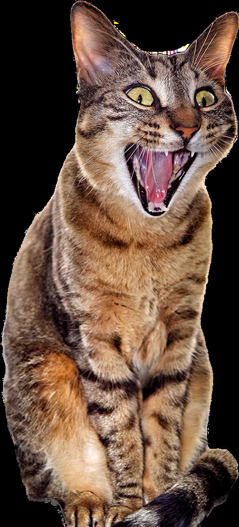 Cat Freetoedit Sticker By 🐾🐾🐾barton🐾🐾🐾