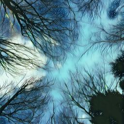 trees sky freetoedit
