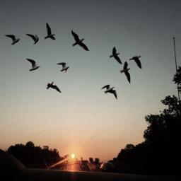 freetoedit birds sunrise trees vintagephoto