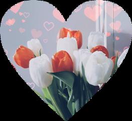 tulips freetoedit