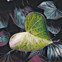 leaf heartshape blackandwhite colorsplash highlightmagiceffect freetoedit