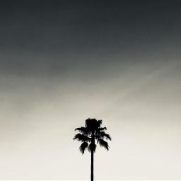 freetoedit interesting photography palmtrees la