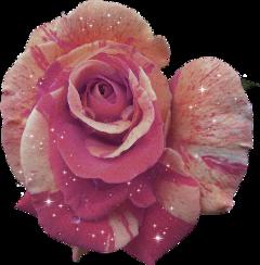 ftestickers rose flower flowers newbrushes freetoedit