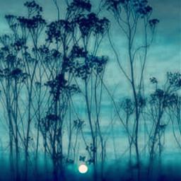 freetoedit nature naturebeauty blue sky