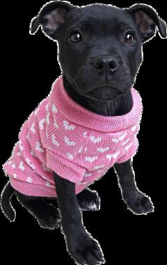 ftestickers puppy dog cute sweater freetoedit