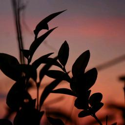 hope sunsetcolors sunsetsilhouettes naturephotography life
