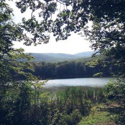 landscape nature summer lake pond
