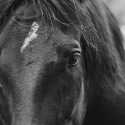freetoedit photography animals horses horse