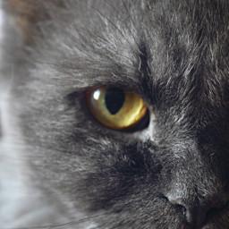 photography pets cat eye goldeneye