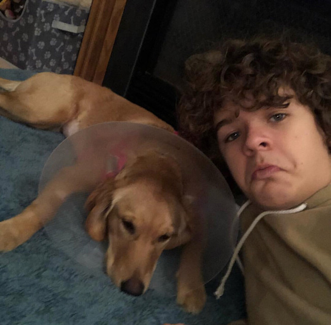 Happy belated Valentine's Day from me and the newly fixed puppy. #coneofshame