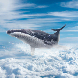 whale clouds sky blue bluesky freetoedit