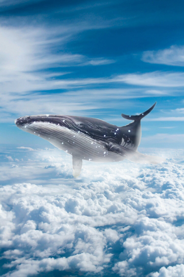 She is definitely having a whale of a time! We would like to express our gratitude to the final creator of this work @flreen, who edited the image by @ionabondlopez, @luismartinez100, and @freetoedit. Upload your own animal image or edit this one! #Whale #Clouds #Sky #Blue #BlueSky #FreeToEdit