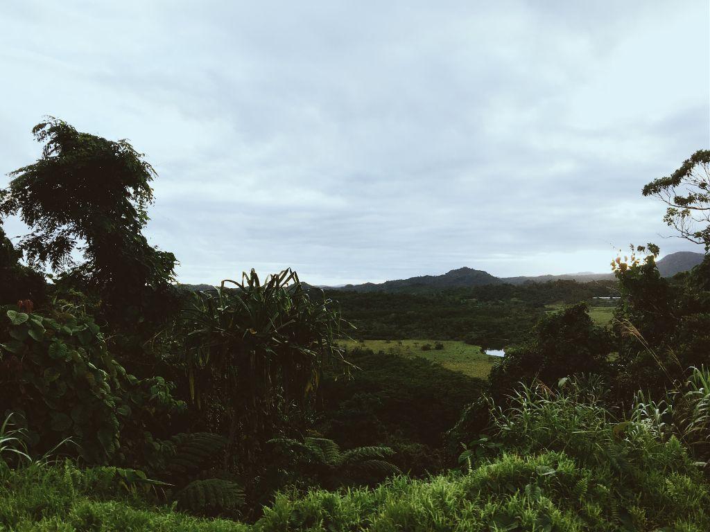 Green #pcbeautifulscenery #beautifulscenery #pctrees #trees #pcnature #nature #pcgrass #grass