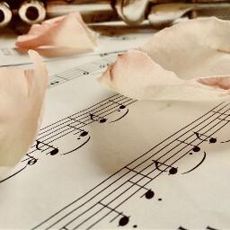 flute rosepetals sheetmusic musicnotes aestheticmusic freetoedit