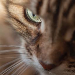 cat eye photography photo
