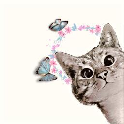 freetoedit cat butterfly flower