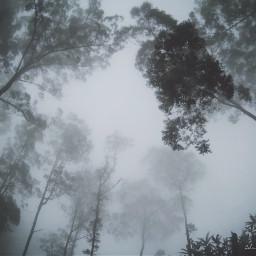 fade darkness vsco jungle foggy