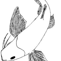 myart koifish drawing mydrawing