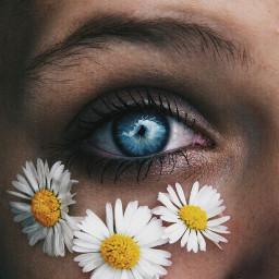 freetoedit eyes ojos margaritas flowlers