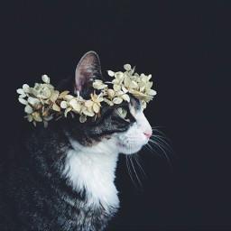 cool tumblr gato 🐈