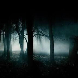 dusk dark forest midnight scary freetoedit