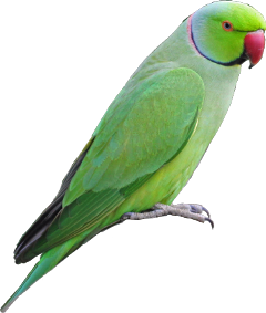 scparrot parrot freetoedit dailystickerchallengeremix dailysticker