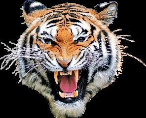 freetoedit tiger mask head eyes