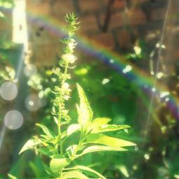freetoedit plants nature saturday