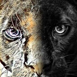 freetoedit theblackpanther reallife magicselfie hdr1