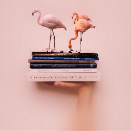 flamingo flamingos book books pinkbackground freetoedit