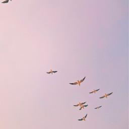 freetoedit birds evening minimalism photography