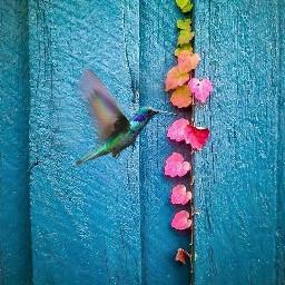 freetoedit spring hummingbird bird colorful