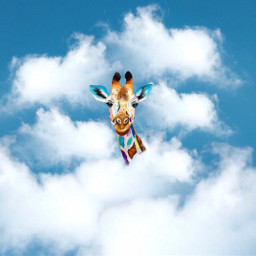 giraffe animal sky clouds freetoedit